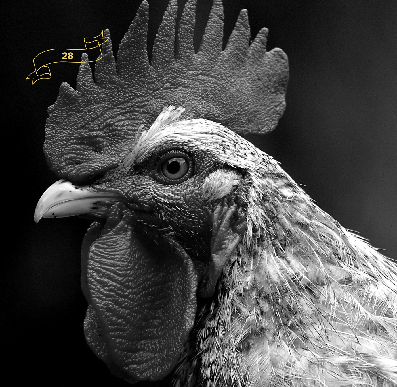 rooster-el-bravo-yoenpaperland