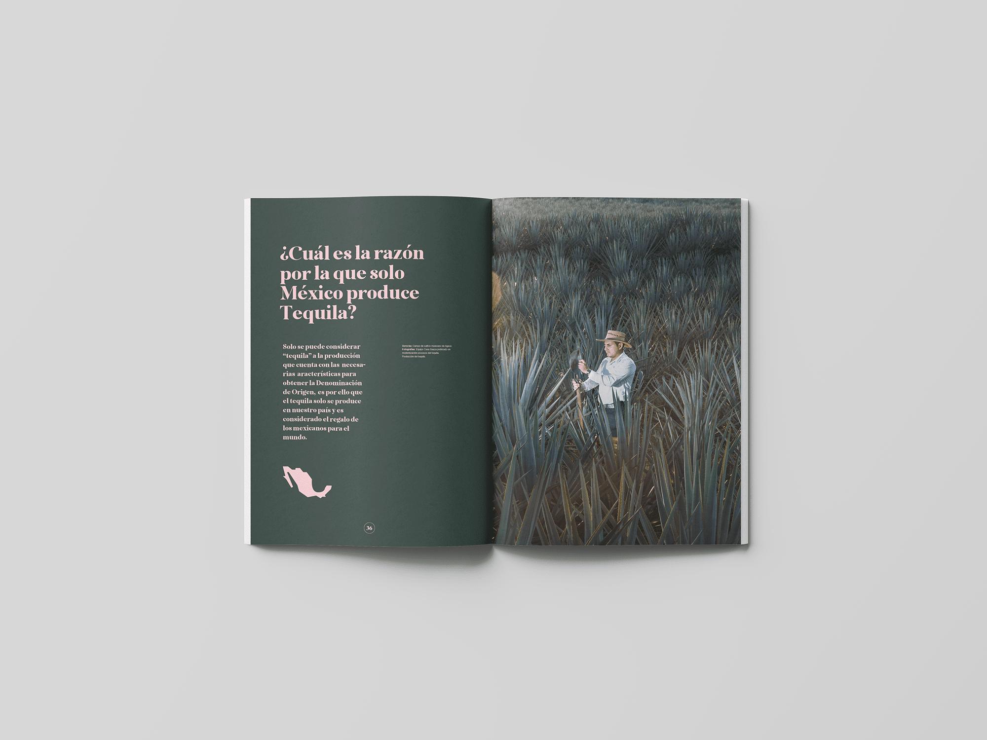 spread-13-book-agave-yoenpaperland
